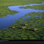 aerial-view-elephants-kenya-981243-lw