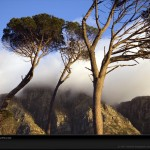 cape-town-trees-1053751-lw
